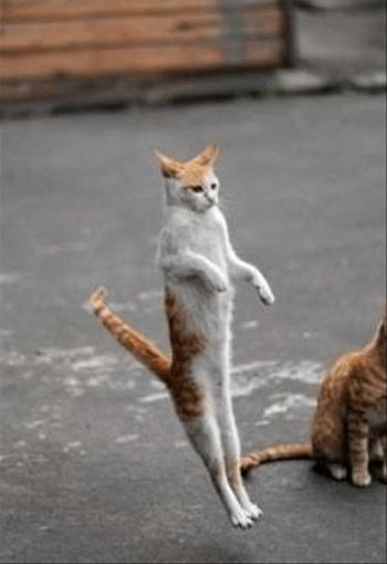 猫背を治す方法