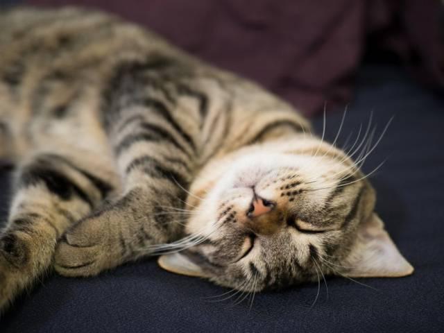 睡眠時間を長くして免疫を高める